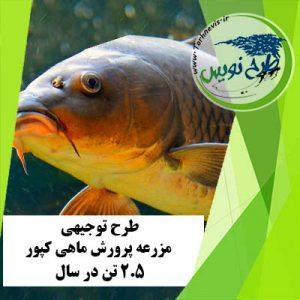 طرح توجیهی پرورش ماهی کپور 2/5 تن در سال