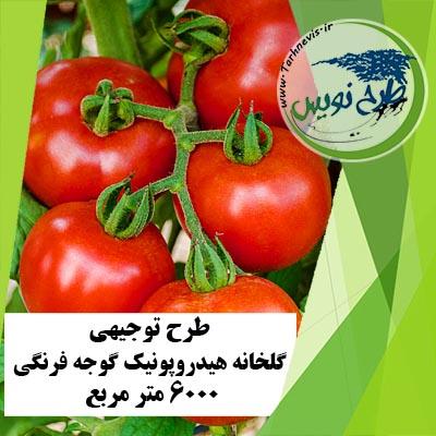طرح توجیهی گلخانه گوجه فرنگی 6000 مترمربع