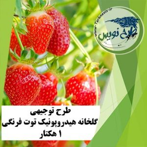 طرح توجیهی گلخانه هیدروپونیک توت فرنگی 1 هکتار