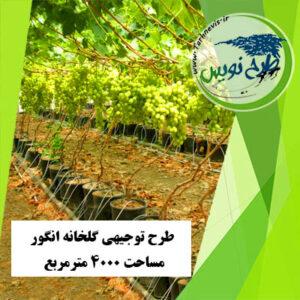 طرح توجیهی گلخانه انگور 4000 مترمربع